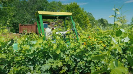 herbicides : Wilson, NY, USA, July 2019: Side view of Farmer on a small tractor with additional equipment processes the vine of the grapes with herbicides Stock Footage