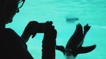 pinguim : A woman is taking pictures of a fun penguin. The bird swims in the pool, it can be seen through the transparent window Stock Footage