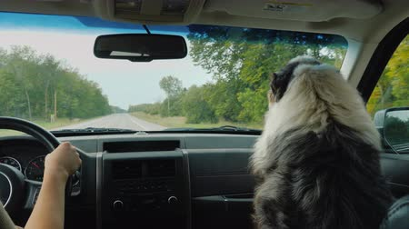 favori : True friend dog travels with owner in car