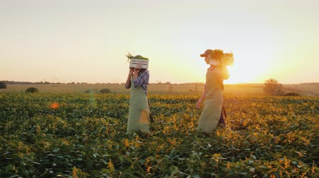 A family of farmers carries boxes with vegetables across the field. Organic farming and healthy eating concept