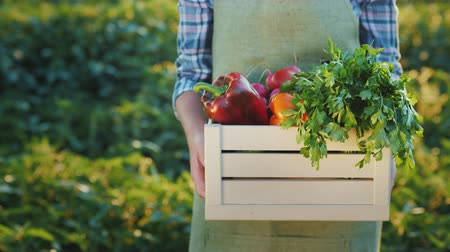 выращивание : A farmer holds a box of juicy fresh vegetables from his field