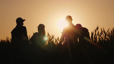 felicitação : A team of successful farmers emotionally congratulates each other. Standing in a wheat field