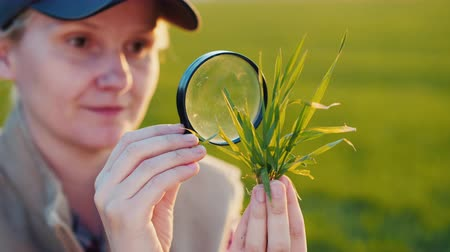 hajtások : Portrait of a young woman agronomist studying wheat shoots through a magnifying glass