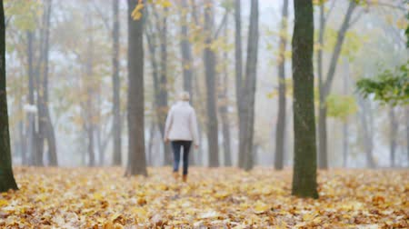 elválasztás : Fallen leaves in the park, in the distance a blurred silhouette of a woman