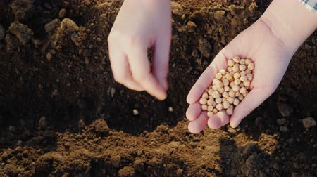 peas : Side view of A farmer plants grain in his field. Work in the garden Stock Footage