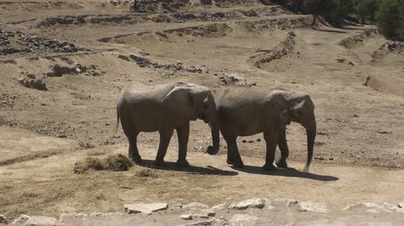 fil : South African Elephants