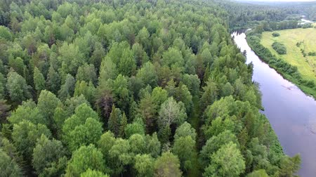 Flying over Forest. Drone flies over the river and dense forest