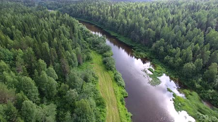 Top View of Forest and River. Drone flies over the river and the forest in the dark evening
