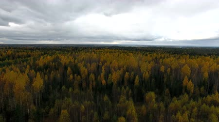 Fall Forest Top. Autumn forest in the evening, the view from the top. In the forest there are trees with yellow leaves. The weather is overcast
