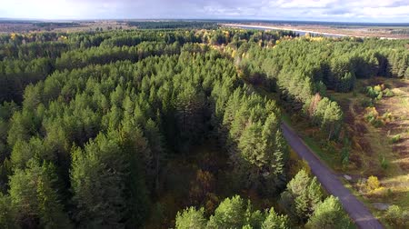 Flying over Forest and Road. Top view of the road in the middle of a pine forest. On the road going car. Autumn landscape.