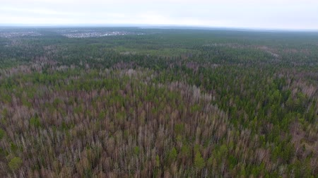 Spring Forest on Top. Drone with a camera flies over the forest in the spring. Below, the green conifers and deciduous trees, but without leaves. Far ahead is a small town