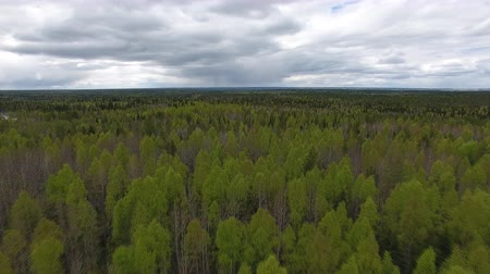 Flying over Forest in Cloudy Weather. Video shoot with the copter flying over the trees in the forest in early summer. Forest grows in the North Stock Footage