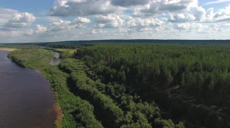 Camera Flies over River Bank. Quadcopter with a camera flying over the river to the shore. On the shore grows coniferous forest Stock Footage