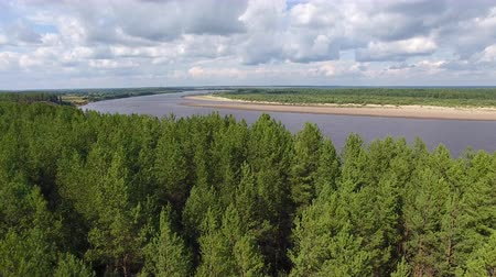 Camera Flies over Pine Forest to River. The camera flies over the coniferous forest to the river. Far on the horizon visible city