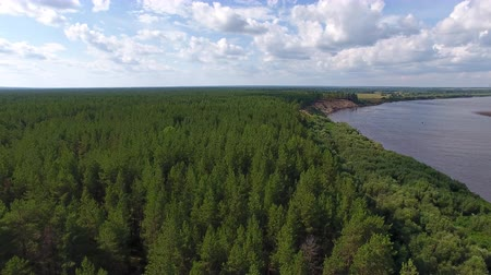 Pine Forest on River Bank. The camera flies over the Bank of a large river. On the banks of the river grows coniferous forest