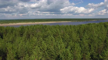 Pine Forest and River. The camera flies over the coniferous forest to the river. On the river you can see a small boat.