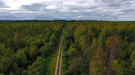 Flying over Road in Forest. Video is taken from above the forest and the road. Wood road
