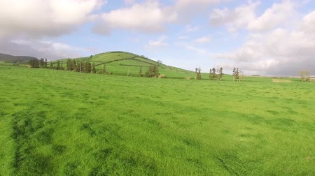 sao miguel : Flying over beautiful green agricultural fields in the Sao Miguel at sunny day, Azores, Portugal. Stock Footage