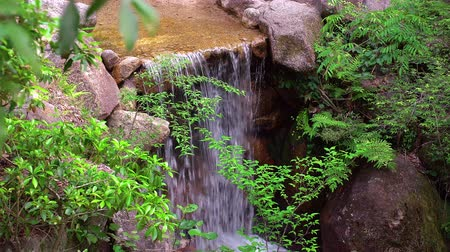 forest creek with small waterfall, panning shot Stock Footage