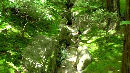 small rivulet flowing in the middle of a moss garden, tilt up shot Stock Footage