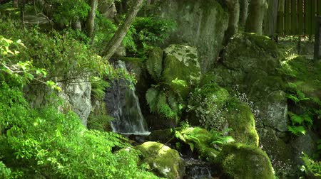 small cascade among mossy rocks and ferns in a lush grove, tracking shot