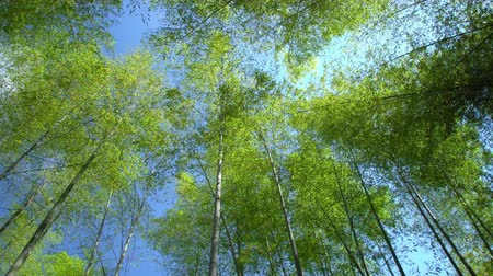 green leaves, low angle shot Stock Footage