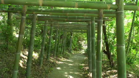 following a bamboo torii tunnel in Fushimi Inari Shrine forest Stock Footage