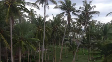 sziget : Palm trees by the ocean in Indonesia, Bali. Drone shooting. Stock mozgókép