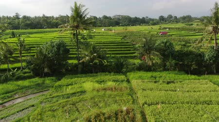 montañas : Drone flying over rice plantations on a sunny day in Bali, Indonesia. Archivo de Video
