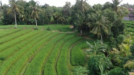 falu : Flight of a drone over a cottage village near rice fields on the ocean in Bali, Indonesia.