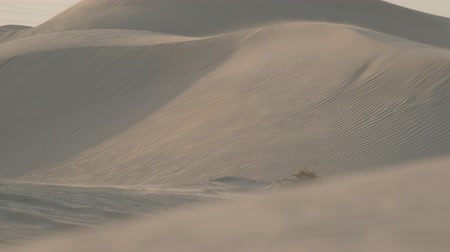 moğolistan : Sand dunes in the desert of Dubai during the wind. Slow motion