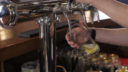 beer tap : Bartender starts to pour glass of draft beer. Medium shot
