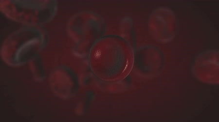 sahte : 3d abstract red blood cells floating,close up,  scientific or medical or microbiological background Stok Video