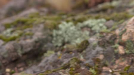 aparat fotograficzny : close-up of foliage and moss on stones. camera movement from left to right. no sound