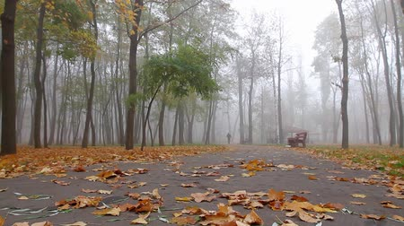 fog, autumn, a man is walking along an alley in a park in the distance. camera movement is on the left, the lower angle, full hd, there is no sound.