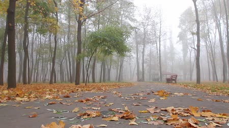fog, autumn, people walk along an alley in a park in the distance. camera movement, left to right, bottom view, full hd, no sound.