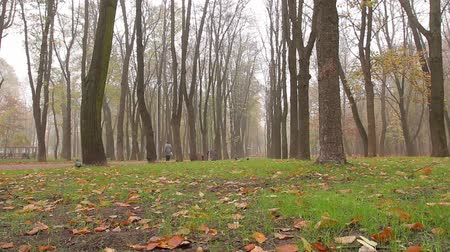 fallen leaves : fog, autumn, people walk along an alley in a park in the distance. camera movement, right to left, bottom view, full hd, no sound. Stock Footage