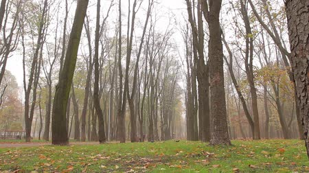 fog, autumn, alley in the park. camera movement, left to right, bottom view, full hd, no sound. Wideo