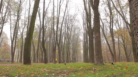 fog, autumn, people walk along an alley in a park in the distance. camera movement, right to left, bottom view, full hd, no sound. Wideo