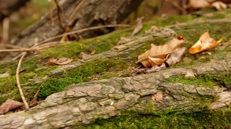 driftwood : movement of the camera from left to right along the tree trunk with access to a close-up of a slug crawling along a leaf, full xd, there is no sound.