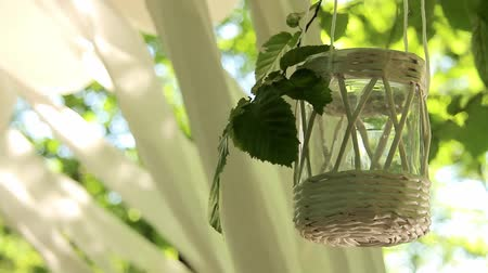 decorated glass jar tied to a tree branch sways from the wind against a background of white stripes of fabric, wedding decor. close-up, full hd, no sound. Wideo