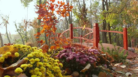 a red decorative bridge in the park among flowerbeds of street chrysanthemums, camera movement from left to right, Full HD; without sound.