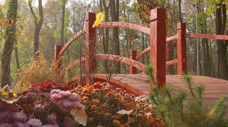 a red decorative bridge in the park among flowerbeds of street chrysanthemums, camera movement from right to left, Full HD; without sound. Стоковые видеозаписи