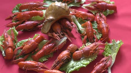 crab eating : River boiled crayfish a good snack to beer
