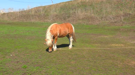 equino : Pony on farm early spring