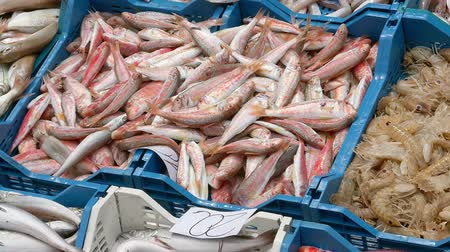 sprats : Fresh fish laid out at a market (Ken burns effect)