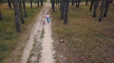 köpek yavrusu : Aerial view of girl playing with her dog in the forest at sunset