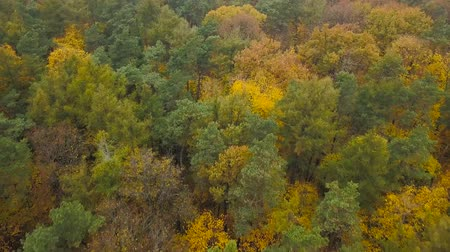 leafs : View from the height on the autumn forest
