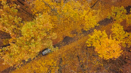 autumn : Aerial view on car driving through autumn forest road. Scenic autumn landscape Stock Footage