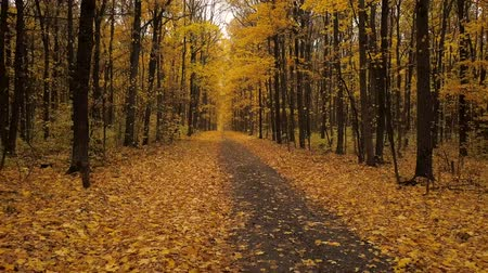 leafs : Flight back along a path in a scenic autumn forest